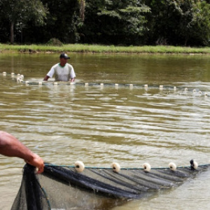 Contribution of community-based bivalve aquaculture to sustainable development